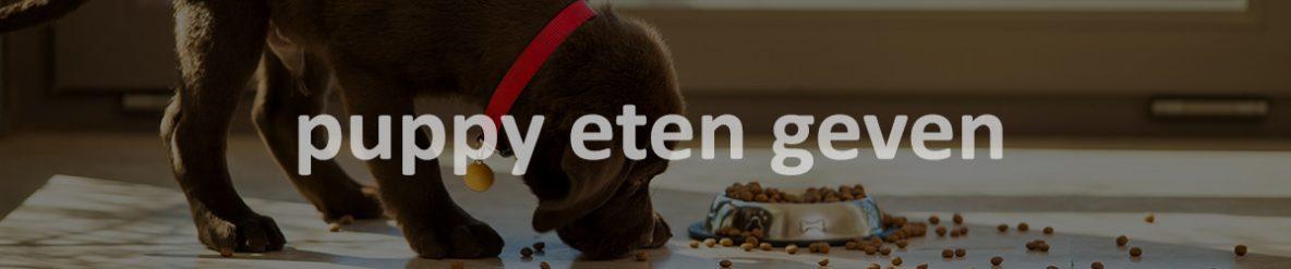 puppy eten geven
