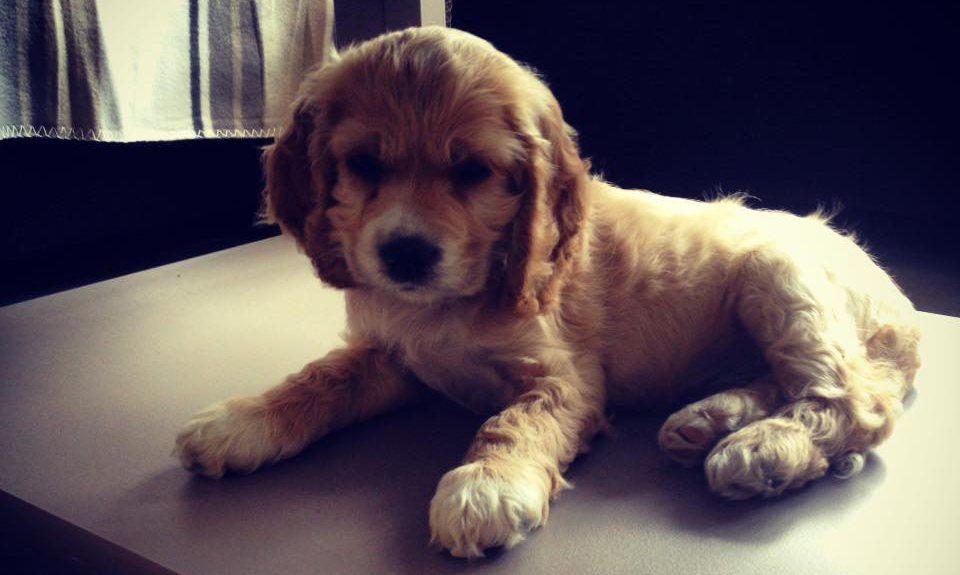 puppy diarree