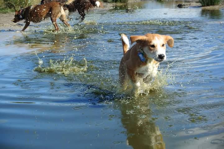 hond socialiseren met water