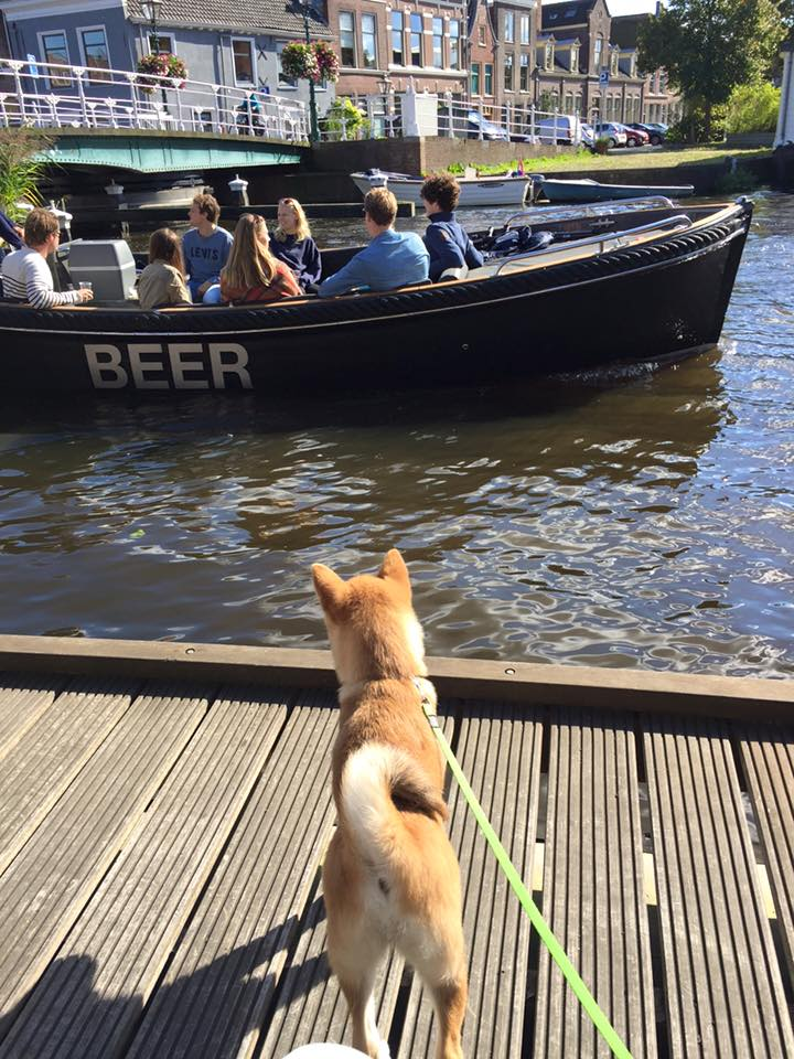 pup socialiseren met boten