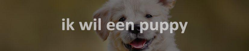 ik wil een puppy