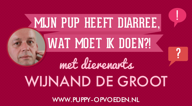 puppy opvoeden podcast aflevering 4