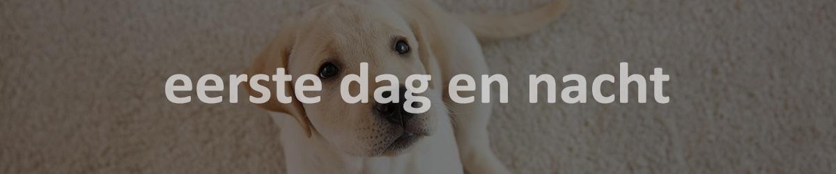 puppy eerste dag en nacht