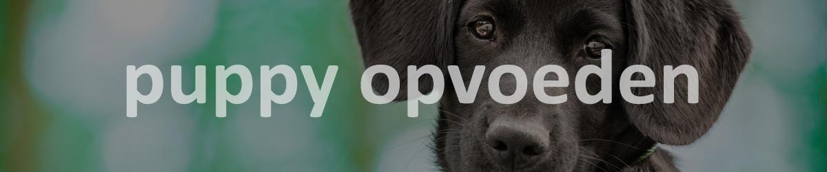 puppy opvoeden blog