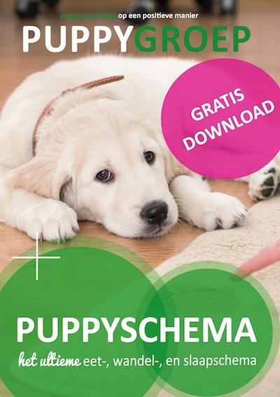 puppy schema