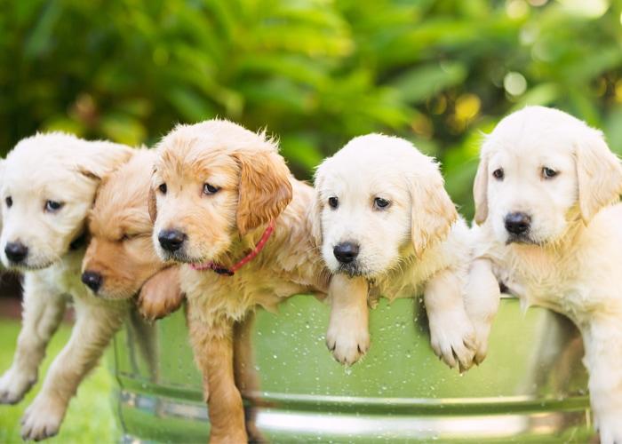 ik wil een puppy kopen en opvoeden