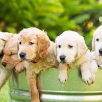 ik wil een puppy opvoeden