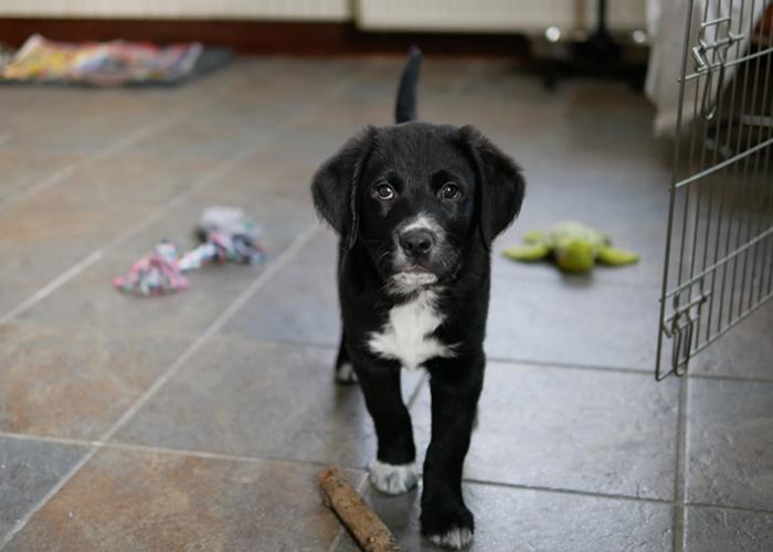 puppy opvoeding schema en checklist