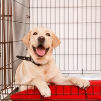 aanschaf en kosten labrador