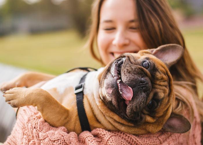 De opvoeding van Franse bulldog puppy's