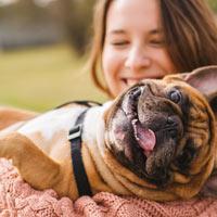 De opvoeding van een Franse bulldog