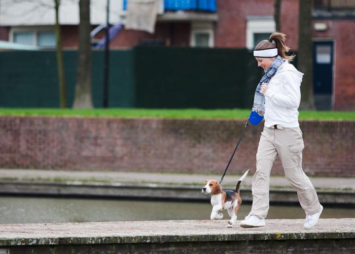 Het opvoeden van een beagle puppy