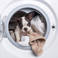 Hoe verzorg je een Franse bulldog puppy