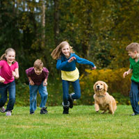 golden retriever pup rent met kinderen