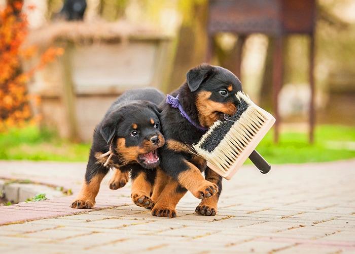 puppy aanschaffen