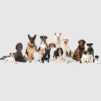 welk hondenras