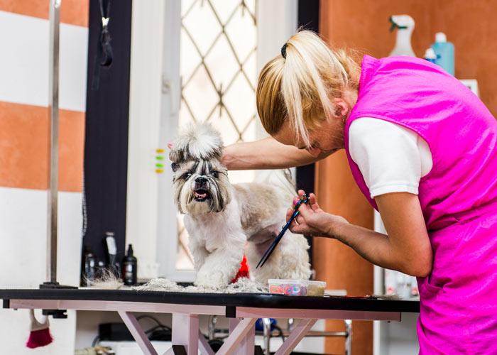 Shih tzu puppy verzorgen