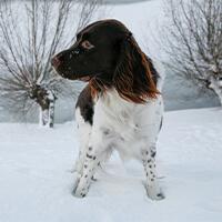 Wat kost een Heidewachtel puppy?